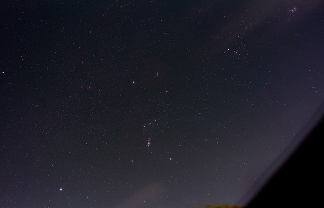 Orion from the backyard
