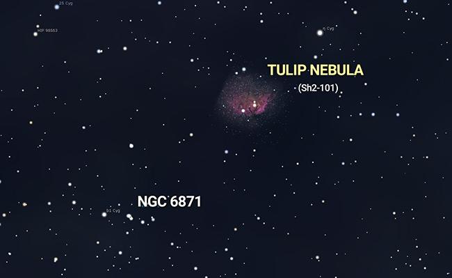 Tulip Nebula location