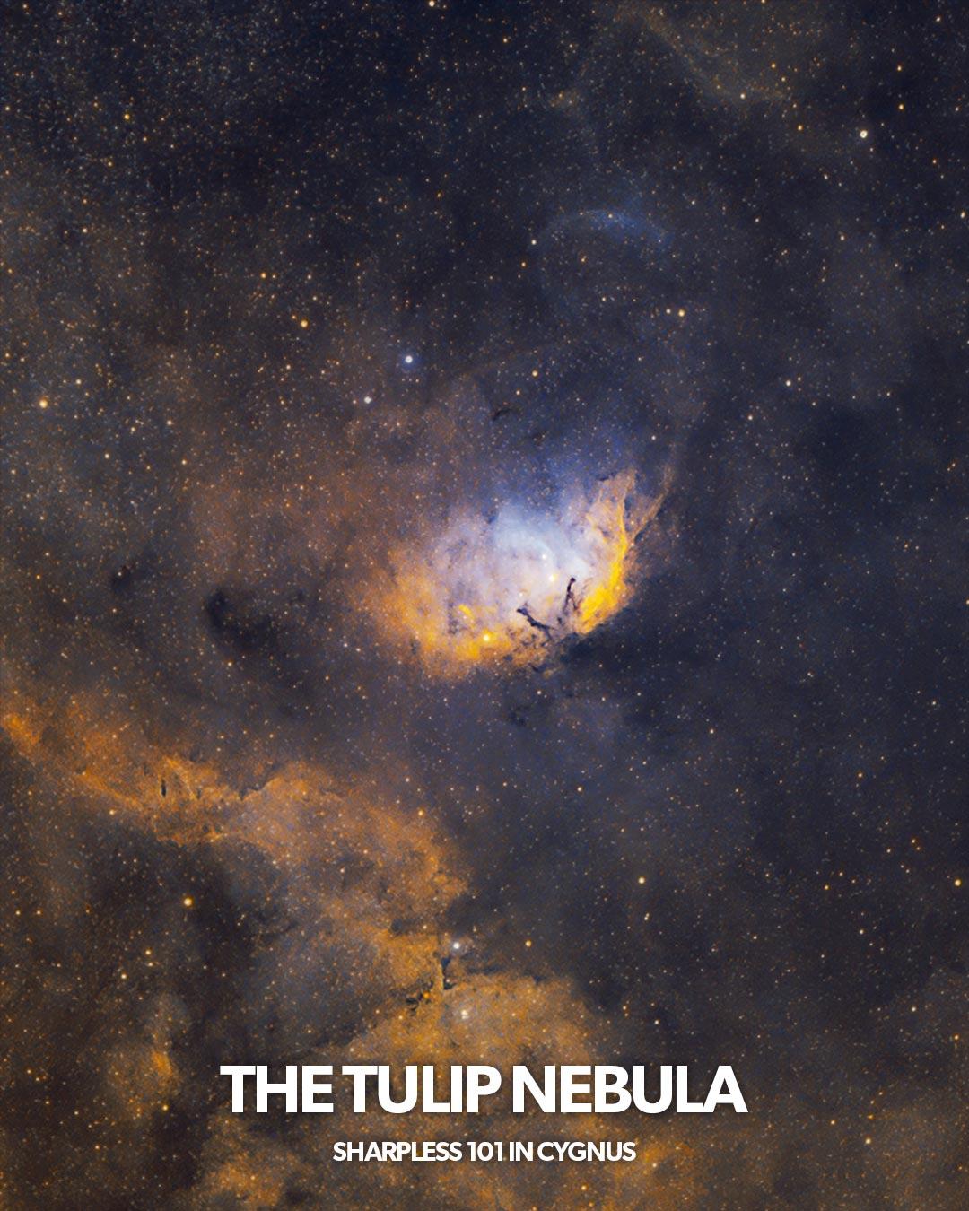 The Tulip Nebula in Space