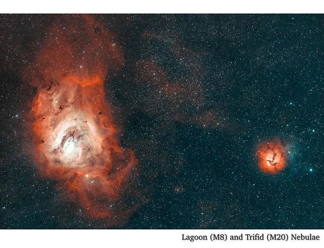Triffid Nebula by Lily Yeo